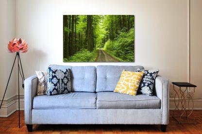 Náhled fotoobrazu Cesta Jarním lesem