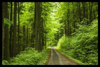 Cesta jarním lesem. Prodej fotoobrazů Dlouhá Trať, Fotograf Lukáš Budínský, podpora Mamma HELP